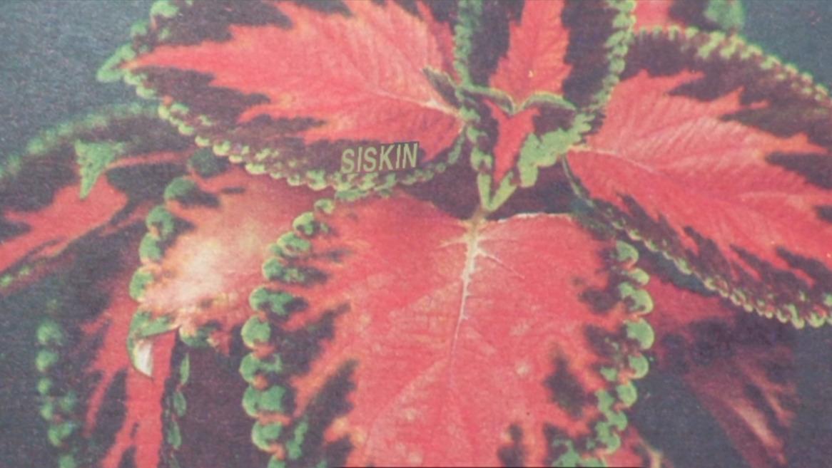 Siskin o un estudi especulatiu sobre la possibilitat d'un llenguatge de les plantes